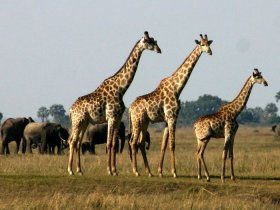 South Luangwa, Kafue and Victoria Falls Affordable Package