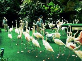 Birds Show