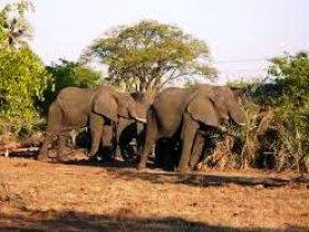 Mosi-oa-Tunya National Park