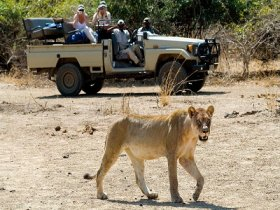 South Luangwa and Livingstone Luxury Package