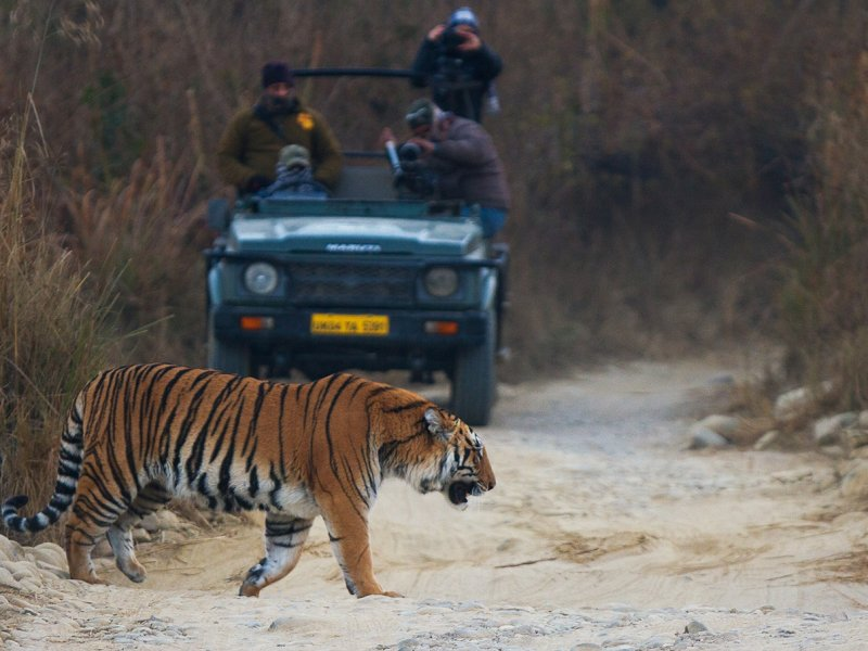 Relax With Tigers In Corbett Park