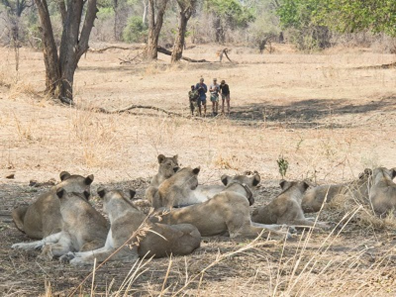 South Luangwa, Kafue and Victoria Falls (Affordable Package)
