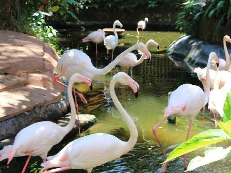 Langkawi Wildlife Park Langkawi